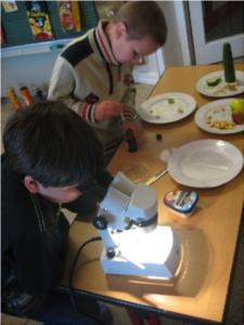 Wissenschaft in der Grundschule