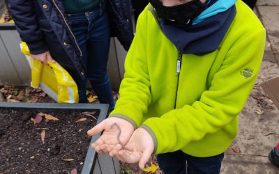 Befüllen der Hochbeete im Schulgarten